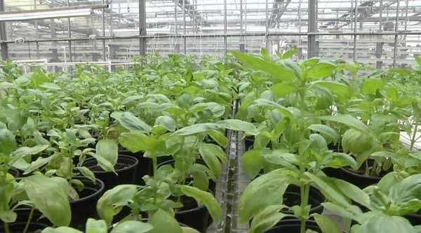 Thimble Farm Greenhouse Martha's Vineyard