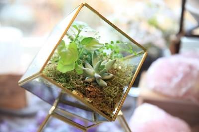 Morrice Florist Terrarium Spring Break Event Martha's Vineyard