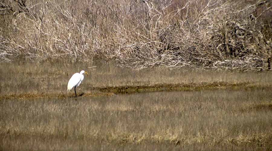 Cape Pogue Wildlife Refuge Chappaquiddick Martha's Vineyard Bucket List Things To Do