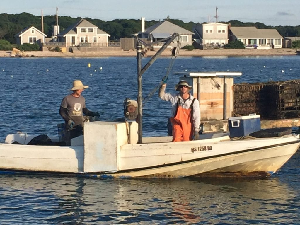 Cottage City Oyster Owners Dan And Greg Martino Oaks Bluffs Farm Field Sea
