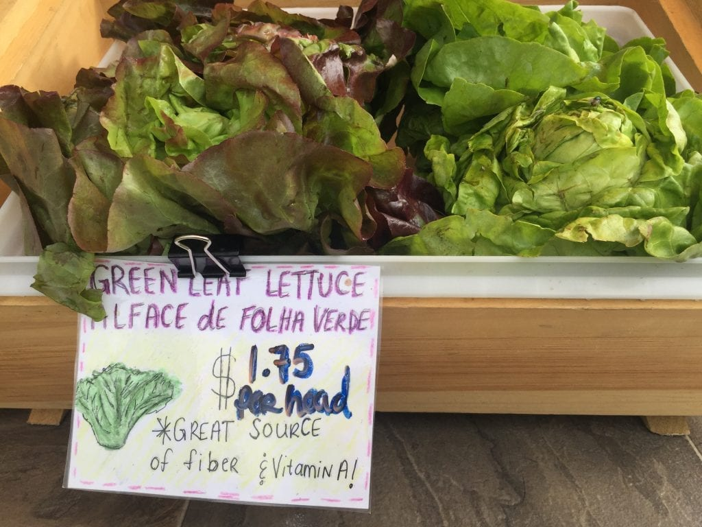 Fresh Greens Lettuce Martha's Vineyard Mobile Market Farmers Market