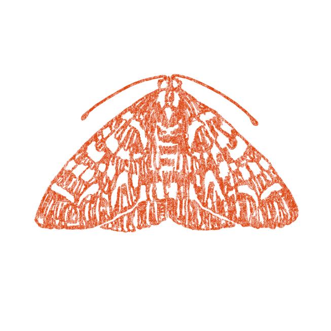 The Moth Martha's Vineyard Storytelling Tabernacle Oak Bluffs
