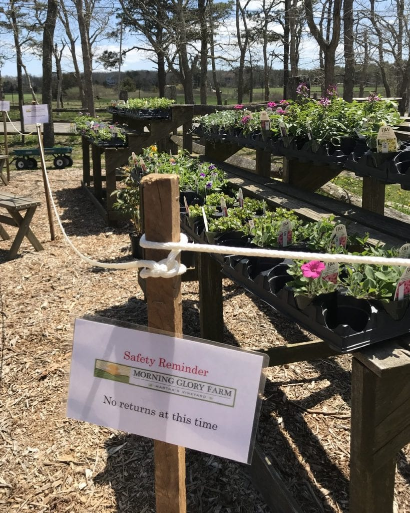 Martha's Vineyard Farmer's Market Morning Glory Farm Opens For Summer Season