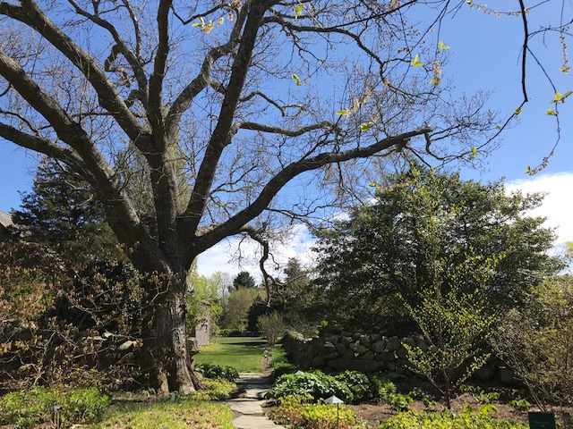 We Love MV - The Polly Hill Arboretum Adventure On Martha's Vineyard
