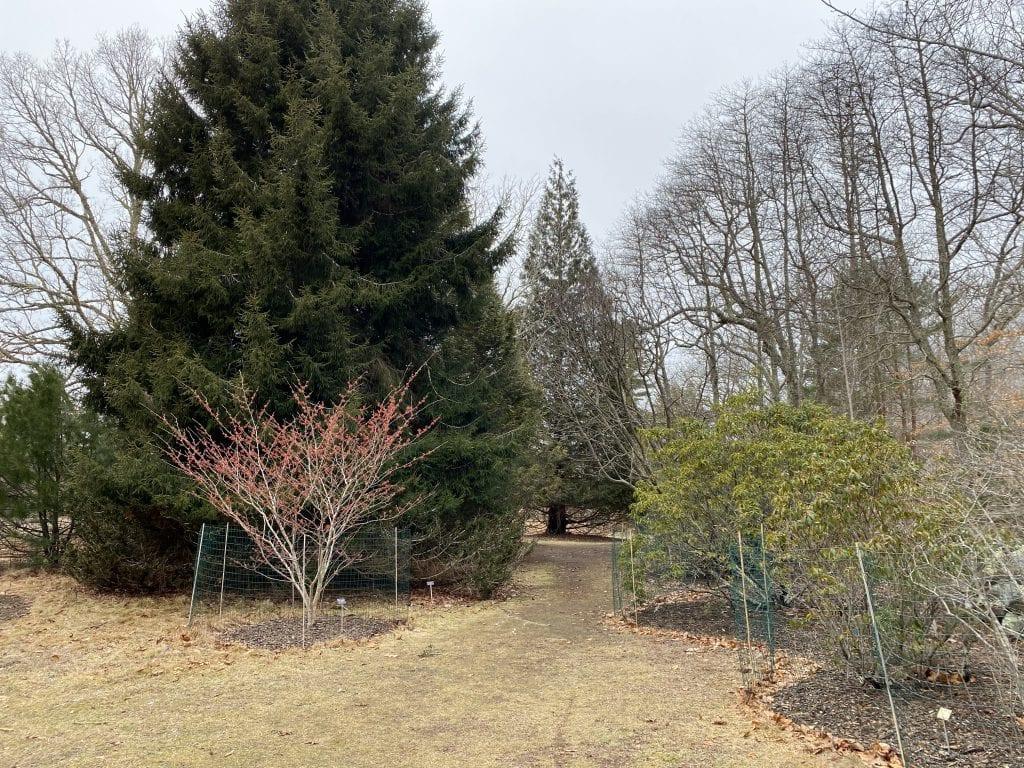 Gnome Hunt Polly Hill Arboretum  Marthas Vineyard We Love MV