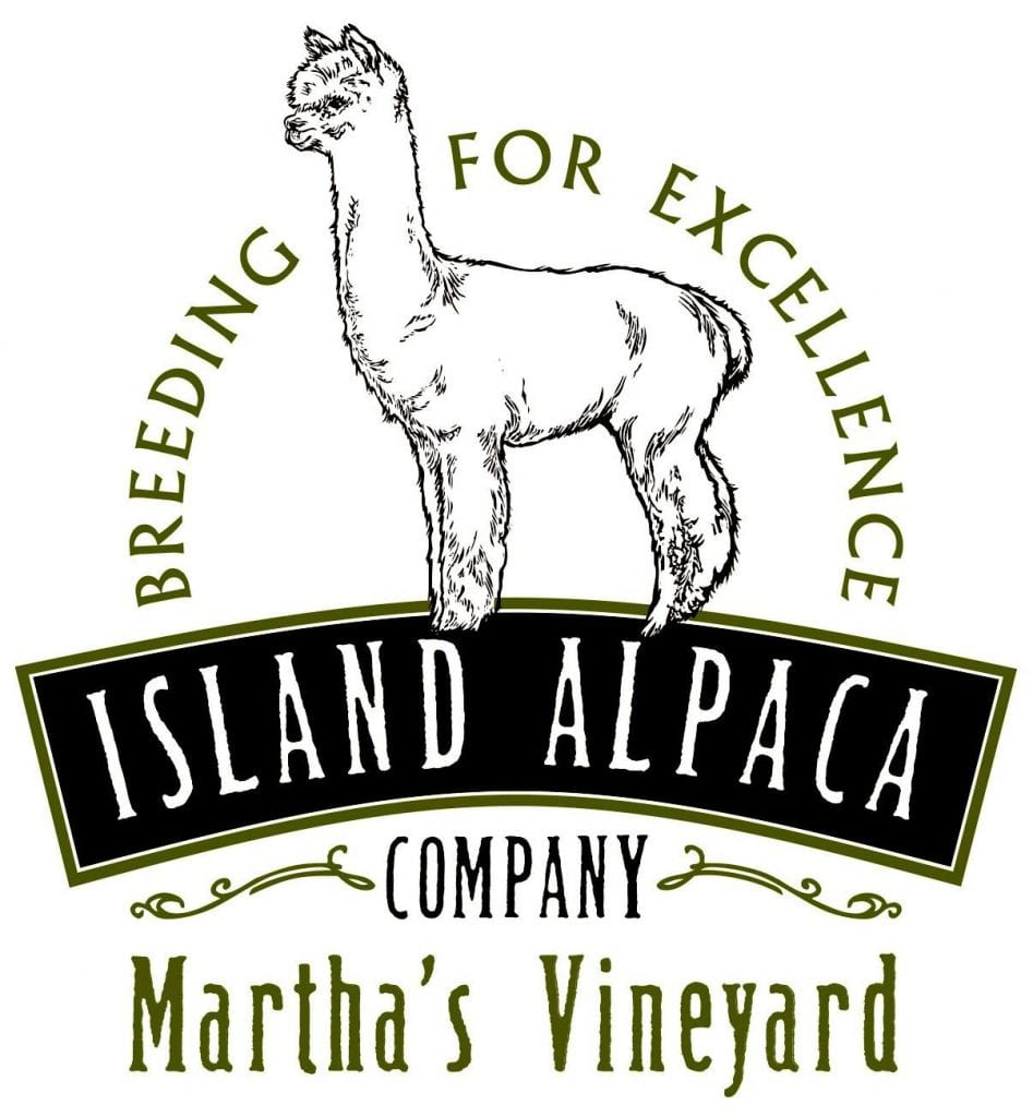 Martha's Vineyard Bucket List: Discovering Island Alpaca