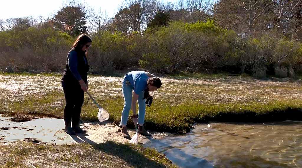 Martha's Vineyard Bucket List: Exploring Felix Neck Wildlife Sanctuary - Shoreline Discovery Tour On Sengekontacket Pond At Felix Neck