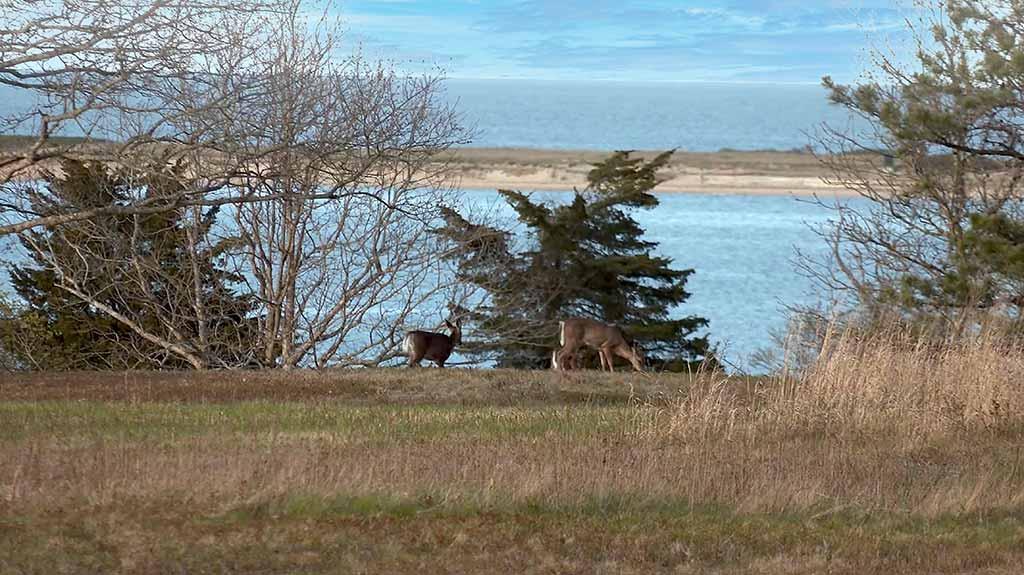 Walking thru the Trails Of Felix Neck Wildlife Sanctuary on Martha's Vineyard