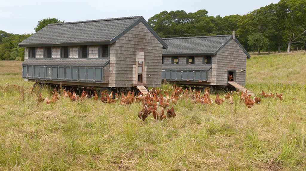 The Grey Barn Martha's Vineyard  Farm Stand  Organic Farm Chilmark Martha's Vineyard Bucket List  Laying hens
